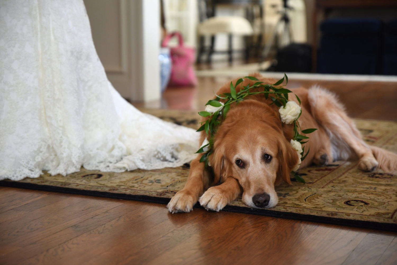 decorated wedding dog
